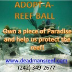 Reefball Adoption