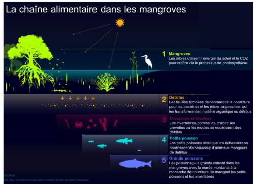Chaine alimentaire mangroves